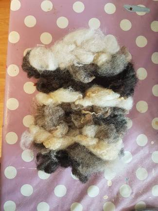 A hand woven sheep fleece rug